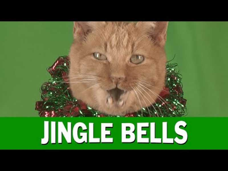 Jingle Cats 2015   Jingle Bells Meowy Christmas